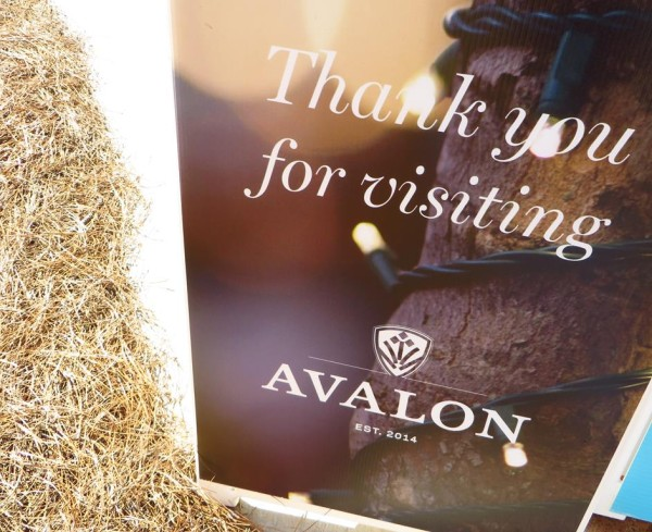 Avalon Shops And More